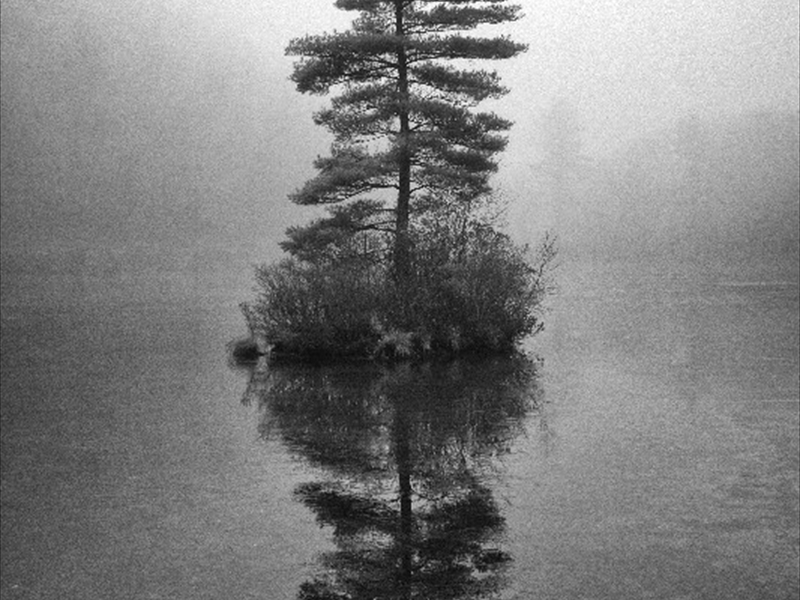 Floating Pine in the Fogwm